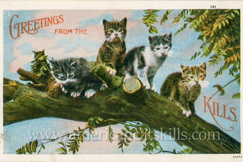 Vintage postcard for the Catskills region depicting four cats relaxing on a tree branch.