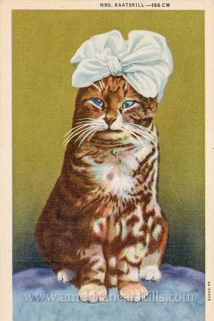 "Vintage postcard titled ""Mr. Kaatskill"" depicting a well-groomed cat in a human tie and top hat."