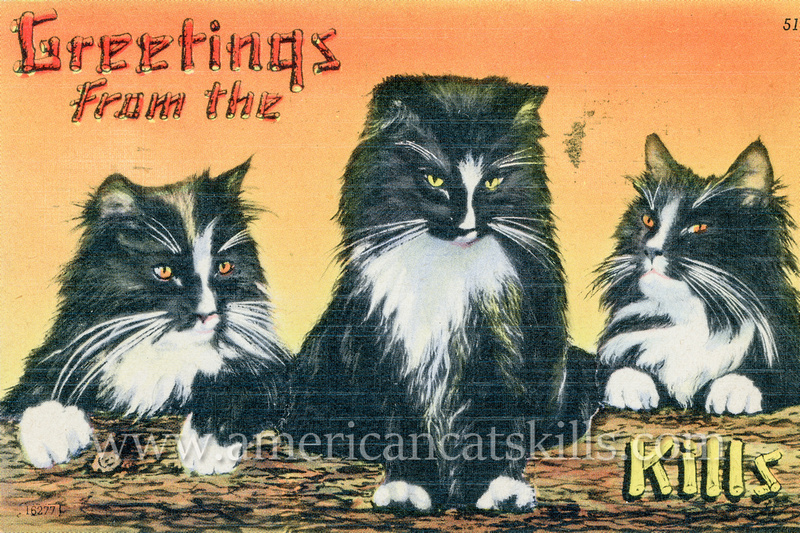 "Vintage postcard titled ""Greetings from the Catskills"" that depict three good-looking cats offering a relaxed invitation to join them in the Catskills."