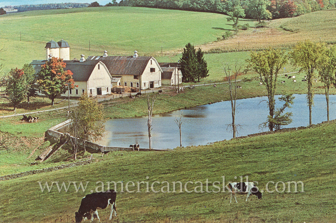 Vintage postcard published by Bob Wyer showing Meridale Farms at Meridale, New York.