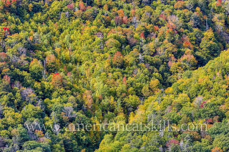 Rich fall colors of the autumn season can be seen throughout Kaaterskill Clove in the northern Catskills.