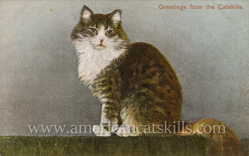 "Vintage postcard published by the Hugh C. Leighton Company titled ""Greetings from the Catskills"" depicting a beautiful cat."