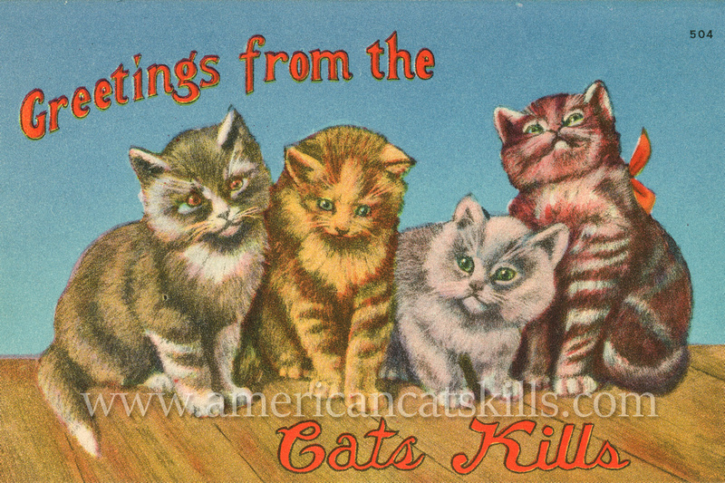 "Vintage postcard by George Greenberg & Son titled ""Greetings from the Catskills"" that depict four good-looking cats offering a relaxed invitation to join them in the Catskills."